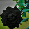 1001_53809966_avatar