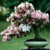 1001_1499077914_avatar