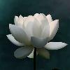 1001_634740370_avatar