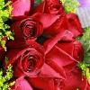 1001_881223105_avatar