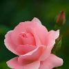 1001_108108674_avatar