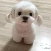 1001_100113931_avatar