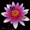 1001_1435886228_avatar