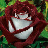 1001_1451067613_avatar
