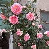 1001_1977751337_avatar