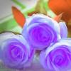 1001_1479074201_avatar