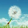 1001_1212748167_avatar