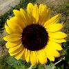 1001_468521304_avatar