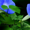 1001_66739611_avatar