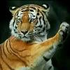 1001_1192032817_avatar