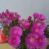 1001_1332616339_avatar