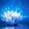 1001_529437110_avatar