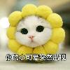 1001_719659176_avatar