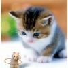 1001_880913846 large avatar