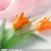 1001_155204359_avatar