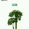 1001_290570861_avatar