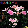 1001_1032394239_avatar
