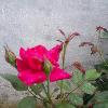 1001_537047598_avatar