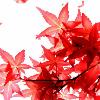 1001_833466_avatar