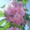 1001_105762507_avatar