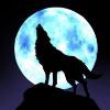 1001_126805410_avatar