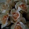 1001_75004849_avatar