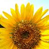 1001_506943245_avatar