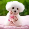 1001_1501242556_avatar