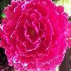1001_189800590_avatar