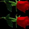 1001_1049205150_avatar