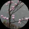 1001_1194716422_avatar