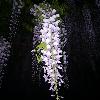 1001_1206812009_avatar