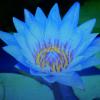 1001_1294799422_avatar