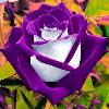 1001_2189880736_avatar