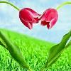 1001_1931988669_avatar