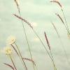 1001_912684452_avatar