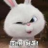 1001_782142586_avatar