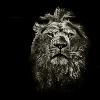 1001_333934834_avatar