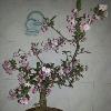 1001_538704308_avatar