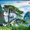 1001_426604152_avatar