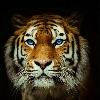 1001_1089608151_avatar