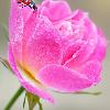 1001_417809521_avatar