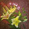 1001_1311715562_avatar