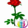 1001_224662392_avatar