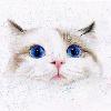 1001_1115441598_avatar