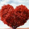 1001_1421098121_avatar