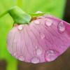 1001_345416617_avatar