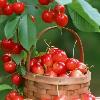 1001_516092527_avatar