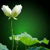 1001_1487558149_avatar