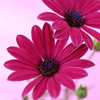 1001_383062903 large avatar